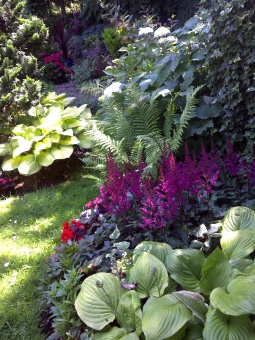 We are going to have to use plantings that work well in shade and half sun, especially if we put wooden fence up.