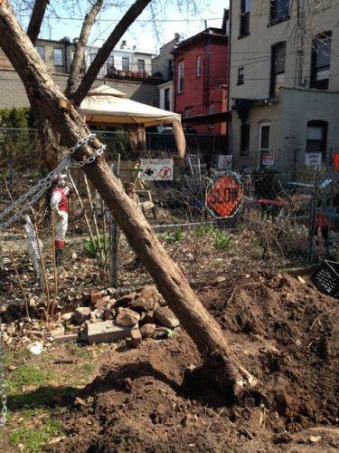 pulling_tree_down